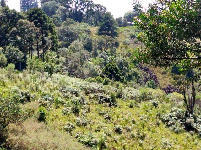 Fazenda de 123 Alqueires .40 Alq de Pasto . Guará ( Guarapuava PR ) - Foto 17