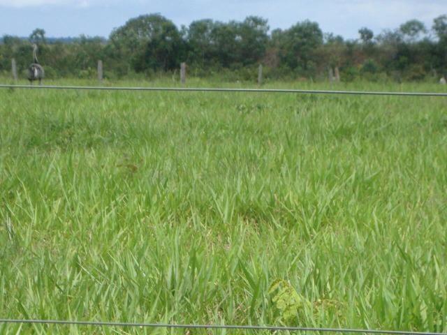Fazenda em Pedro Afonso - 270 km Distante de Palmas - Foto 14