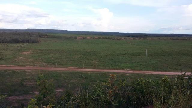 Fazenda em Pedro Afonso - 270 km Distante de Palmas - Foto 12