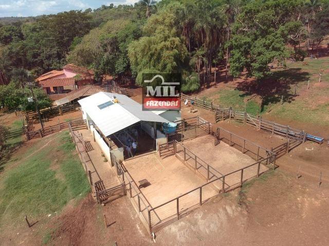 Fazenda 24 Alqueires ( 116.16 hectares )- Santa Cruz \ Cristianópolis-GO - Foto 12