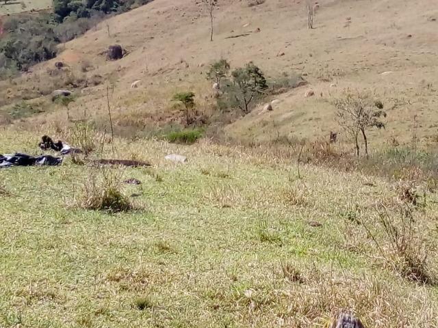 Área Guara x Cunha - Foto 10