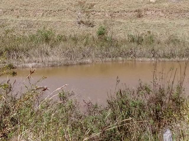 Área Guara x Cunha - Foto 16