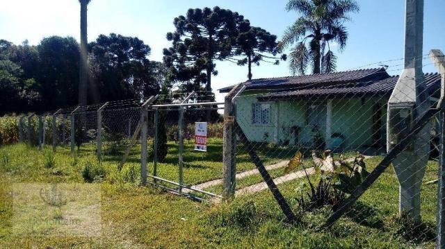 Chácara rural à venda, Campo Largo da Roseira, São José dos Pinhais. - Foto 6