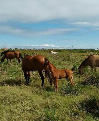 Cursos de equitação e doma - Foto 6