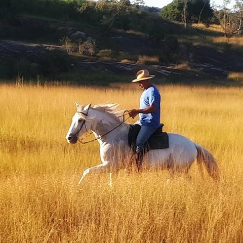 Cursos de equitação e doma - Foto 2