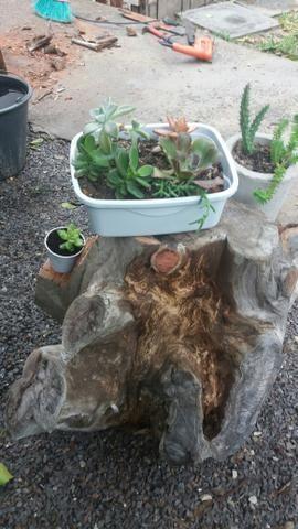 Arte em tocos, para plantas