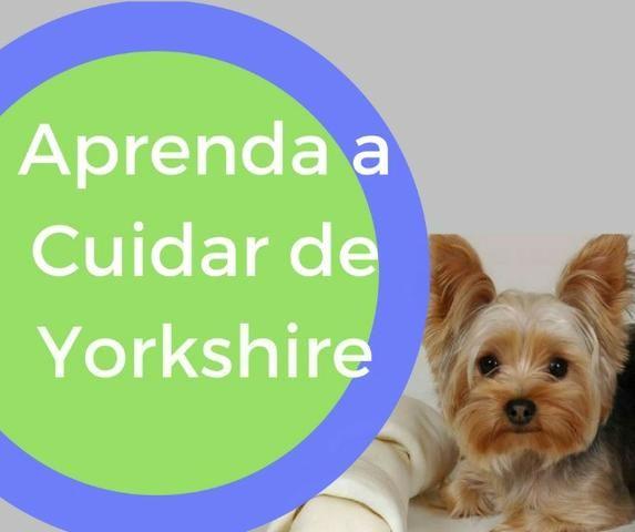 Aprenda a Cuidar do Yorkshire