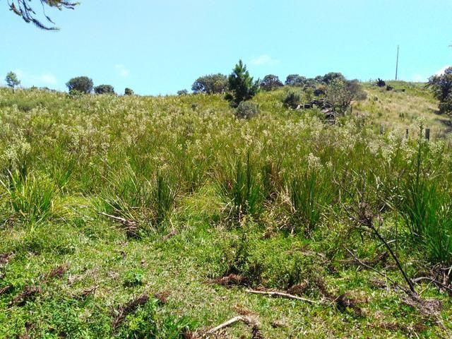 Fazenda de 123 Alqueires .40 Alq de Pasto . Guará ( Guarapuava PR ) - Foto 10