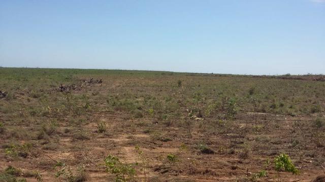 Fazenda em Pedro Afonso - 270 km Distante de Palmas - Foto 17