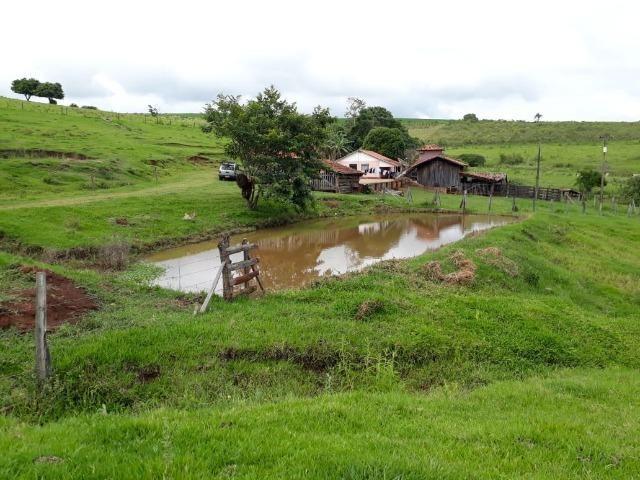Sitio, 6 alqueires e meio, Siqueira Campos-PR - Foto 17