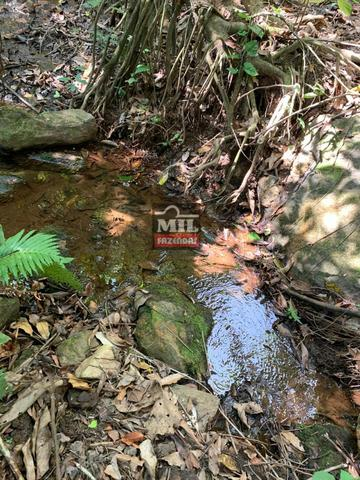 Fazenda 24 Alqueires ( 116.16 hectares )- Santa Cruz \ Cristianópolis-GO - Foto 15