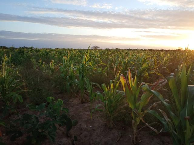 Fazenda Malhada Nova - Foto 6