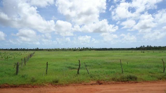 Vendo Fazenda com 250 ha, no Município de Touros