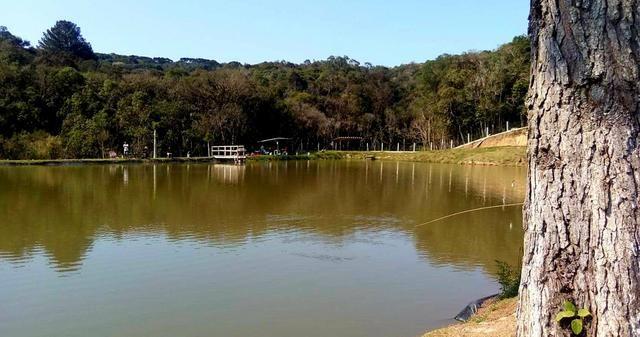 Consultoria para criação de peixes em tanques