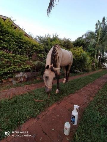 Cavalo Manga Larga - Foto 4