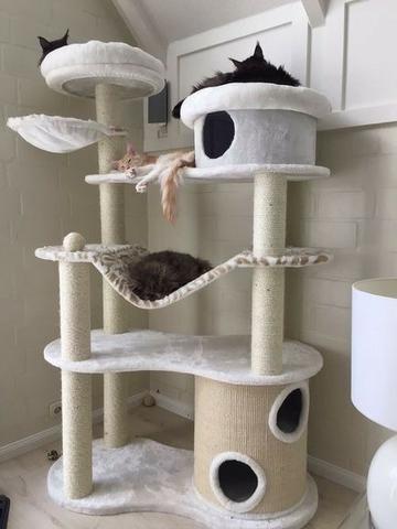 Lindas e Baratas Caminhas e Casinhas Personalizadas p/Gatos - Foto 2
