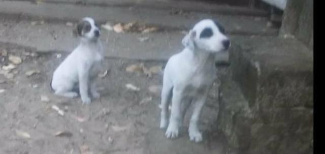 Lindos filhotes para Doação em Capão - Foto 5