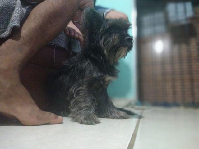 Doa se cadelinha - Foto 2