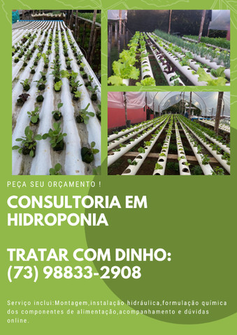 Consultoria de hidroponia