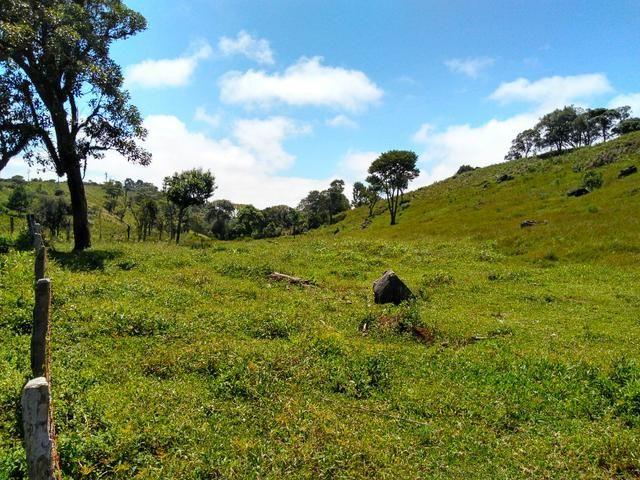 Fazenda de 123 Alqueires .40 Alq de Pasto . Guará ( Guarapuava PR ) - Foto 6