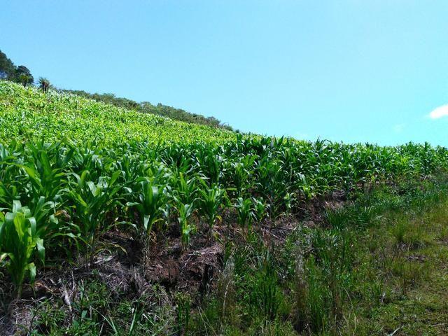 Fazenda de 123 Alqueires .40 Alq de Pasto . Guará ( Guarapuava PR ) - Foto 8