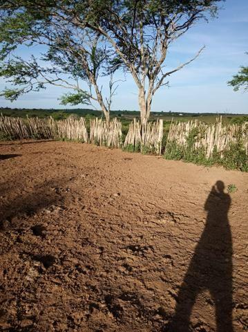 Fazenda Malhada Nova - Foto 3