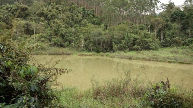 Fazenda com 400.000 Pés de eucaliptos,566 hectares - Foto 5