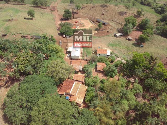 Fazenda 24 Alqueires ( 116.16 hectares )- Santa Cruz \ Cristianópolis-GO - Foto 5