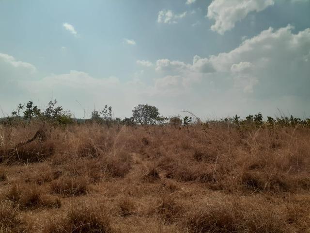 Fazenda venda ou arrendamento lavoura paranatinga - Foto 7