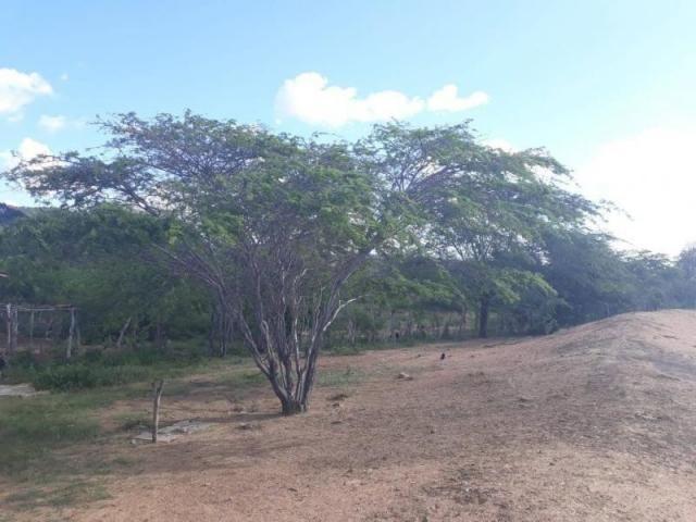 Fazenda para venda em santa cruz do capibaribe, centro - Foto 9