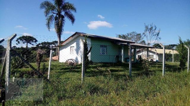 Chácara rural à venda, Campo Largo da Roseira, São José dos Pinhais. - Foto 4
