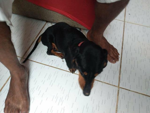 Doação responsável, cadelinha precisando de cuidados - Foto 3