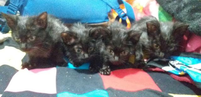 Doação Gatos Filhotes - Foto 2