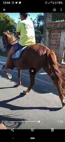 Cavalo esquipador pra vender logo