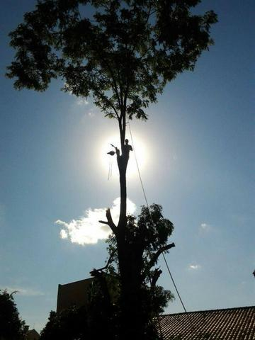 Corte de árvores em geral (remoção de alto risco), remoção de abelhas - JRK Prestação de S - Foto 3