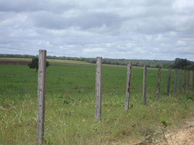 Fazenda em Pedro Afonso - 270 km Distante de Palmas - Foto 16
