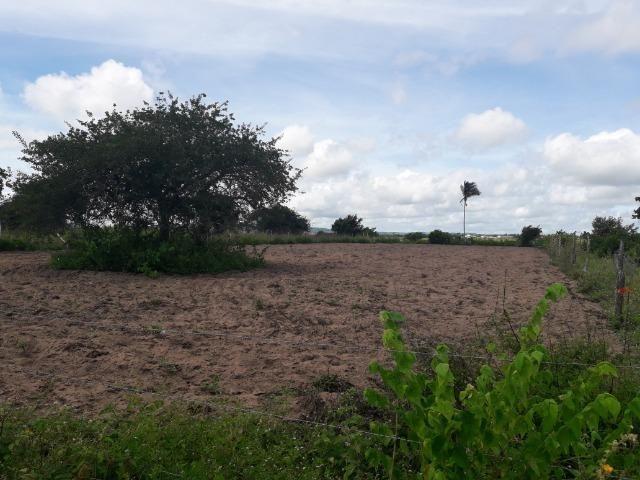 Terreno em Bom Conselho - Foto 3