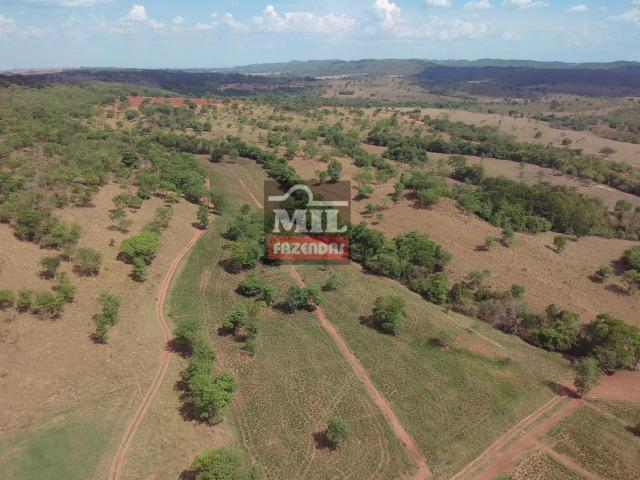 Fazenda 24 Alqueires ( 116.16 hectares )- Santa Cruz \ Cristianópolis-GO - Foto 14