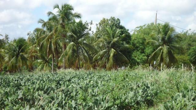 Vendo Fazenda com 250 ha, no Município de Touros - Foto 8