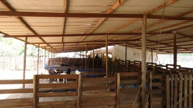 Vendo Fazenda com 250 ha, no Município de Touros - Foto 18