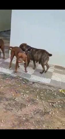 Cachorrinhos - Foto 4