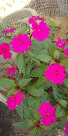 Troco plantas - plantinhas - muda - mudinhas - Foto 2