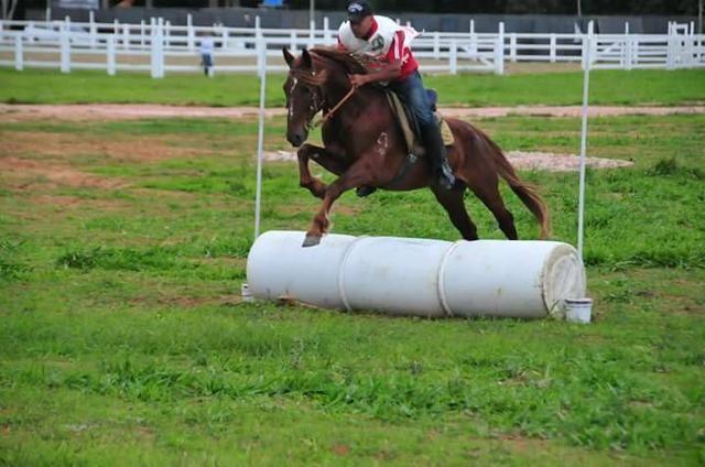 Cursos de equitação e doma - Foto 5