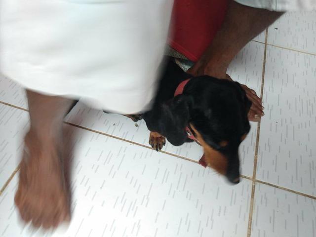 Doação responsável, cadelinha precisando de cuidados