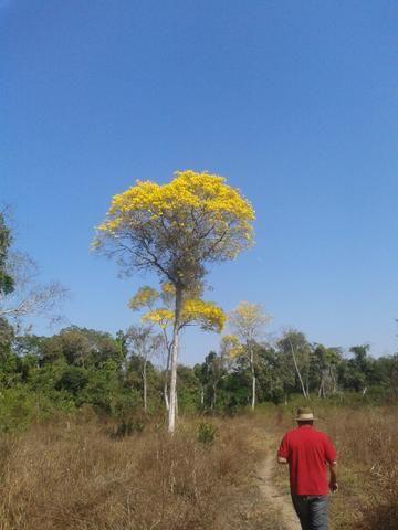 Vende-se(9265he) Melhor fazenda do Sul do Piauí