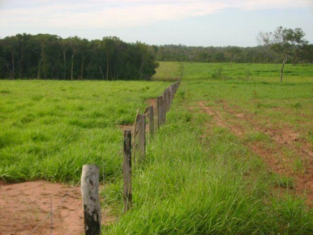 Fazenda em Pedro Afonso - 270 km Distante de Palmas - Foto 3
