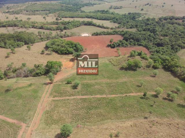 Fazenda 24 Alqueires ( 116.16 hectares )- Santa Cruz \ Cristianópolis-GO - Foto 6
