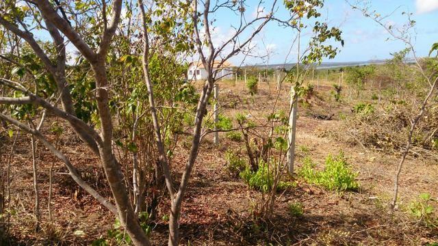 Lote de 200m² em Tibáu do Sul (Pipa) perto da praia - Foto 3