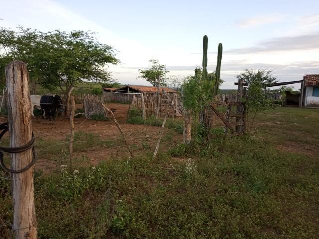 Fazenda Malhada Nova - Foto 4