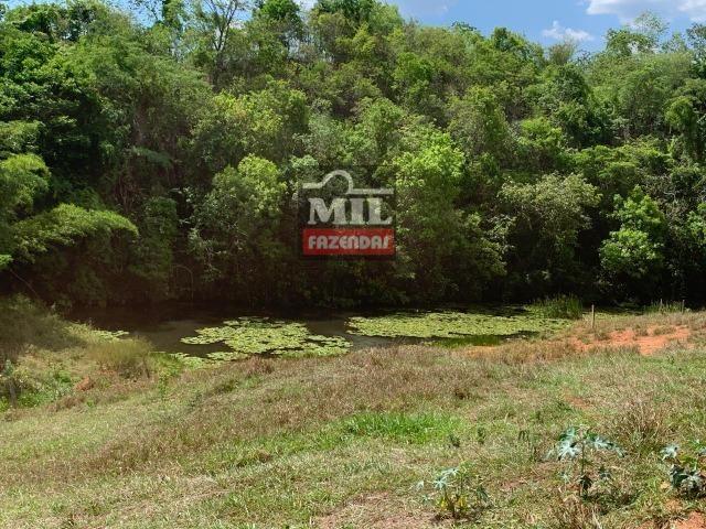Fazenda 24 Alqueires ( 116.16 hectares )- Santa Cruz \ Cristianópolis-GO - Foto 11
